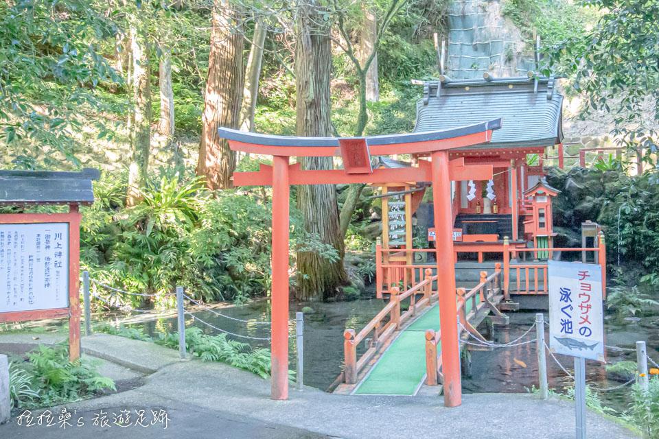 日本鹿兒島指宿市營唐船峽流水麵旁還有著頗為雅緻的造景,一旁有個小神社,水池中還有不少魚兒呢~