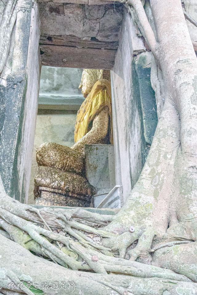 曼谷樹中廟金色的釋迦摩尼像,佛像上,都是信徒們貼著的片片金箔
