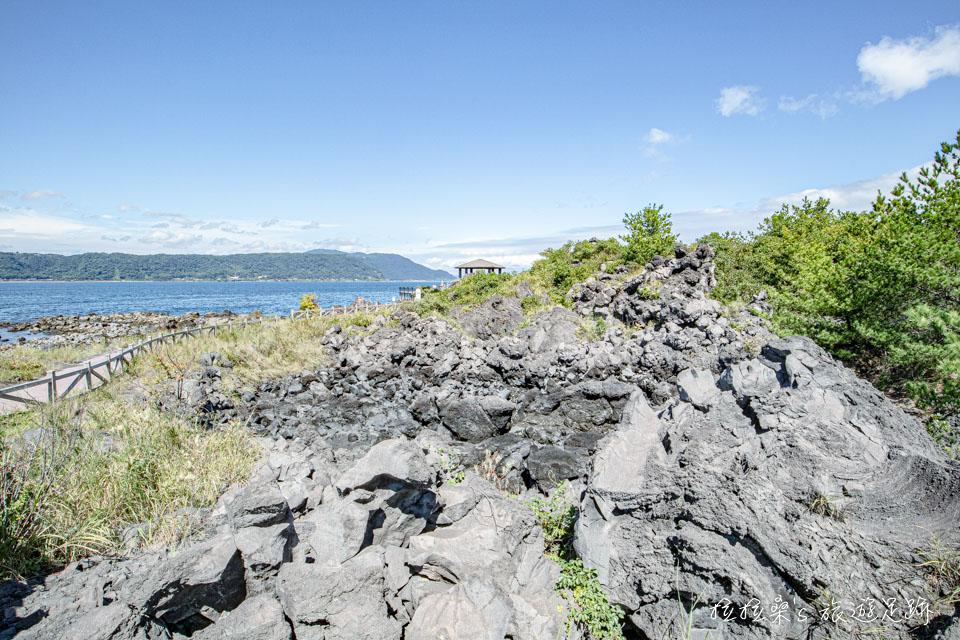 日本櫻島溶岩なぎさ遊歩道沿途就能看到不少形狀奇特的火山岩