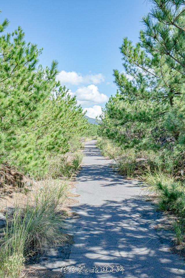 櫻島溶岩なぎさ遊歩道兩旁有著茂密的翠綠植物