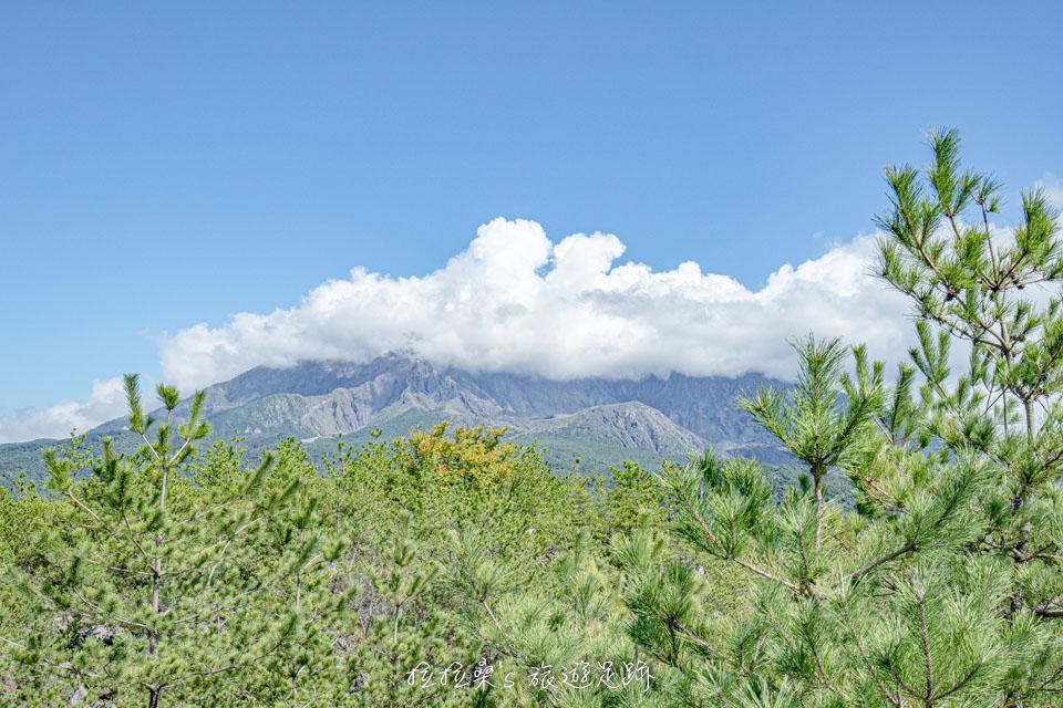 櫻島上的烏島展望所視野十分開闊,櫻島火山清晰可見
