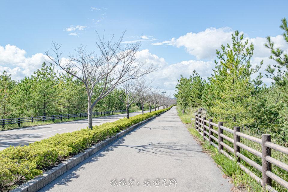 從烏島展望所到遊客中心的大馬路有櫻花可賞