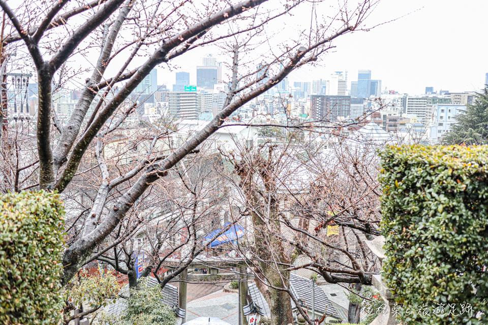 神戶北野天滿神社,初春時有櫻花可賞