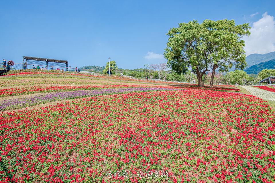 北投社三層崎公園的花海是仿日本北海道富良野花海的設計