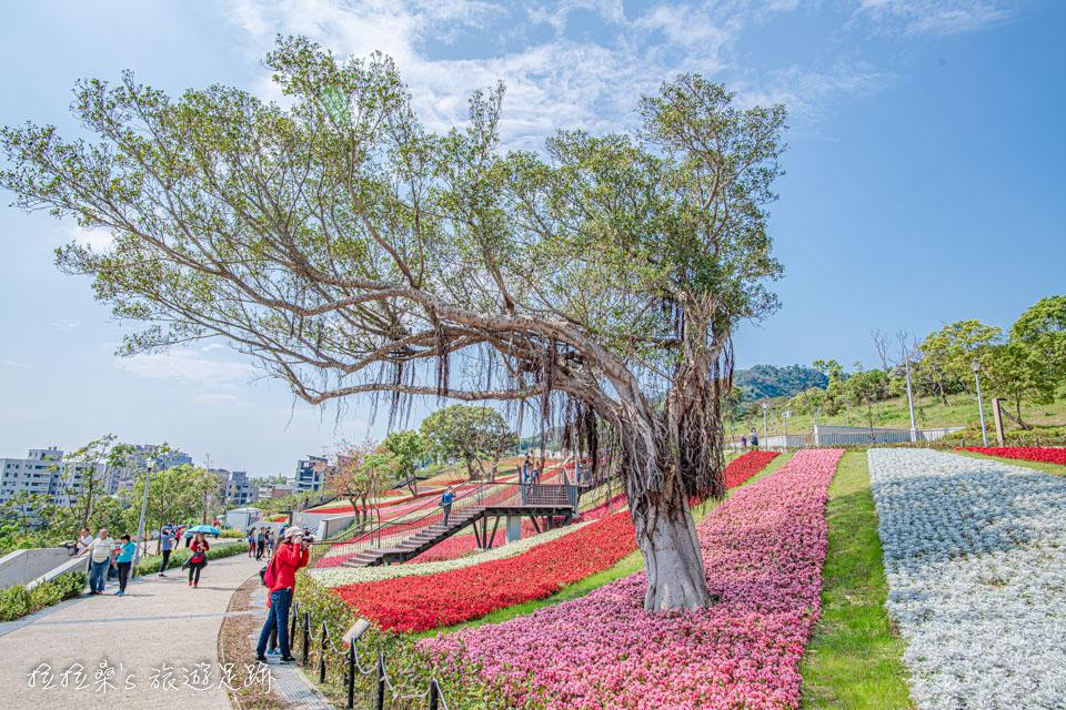 雖然是平日,但還是有不少人來北投社三層崎公園賞花