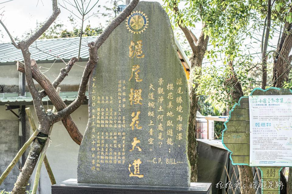 提著滬尾櫻花大道幾個大字的石碑旁,似乎也特意種了幾株櫻花