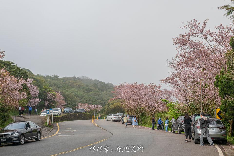 菁山路101巷的櫻花位在松園禪林景觀餐廳的附近