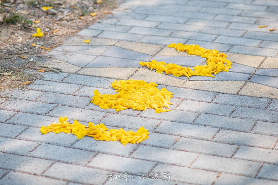 利用飄落的風鈴木來排字,也算是賞花的傳統了