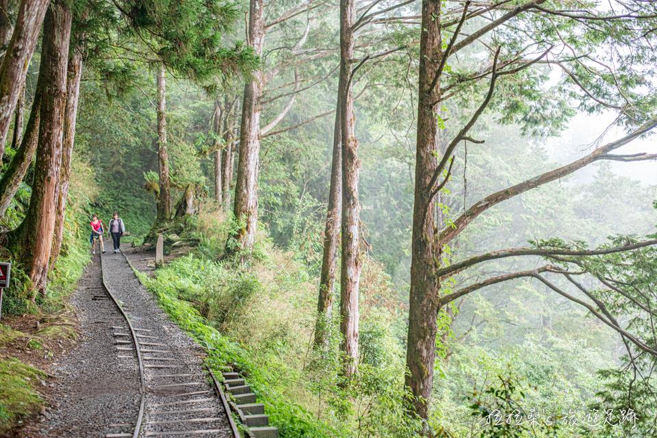 太平山見晴懷古步道,一路平緩好走