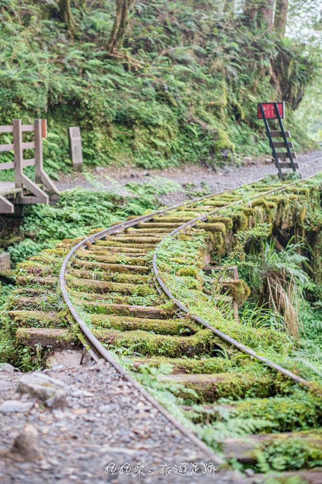 見晴懷古步道最美的風景,滿佈綠色植物的舊鐵道