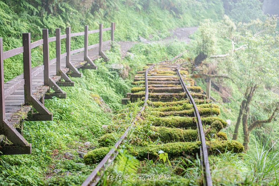 太平山見晴懷古步道最美的風景,滿佈綠色植物的舊鐵道
