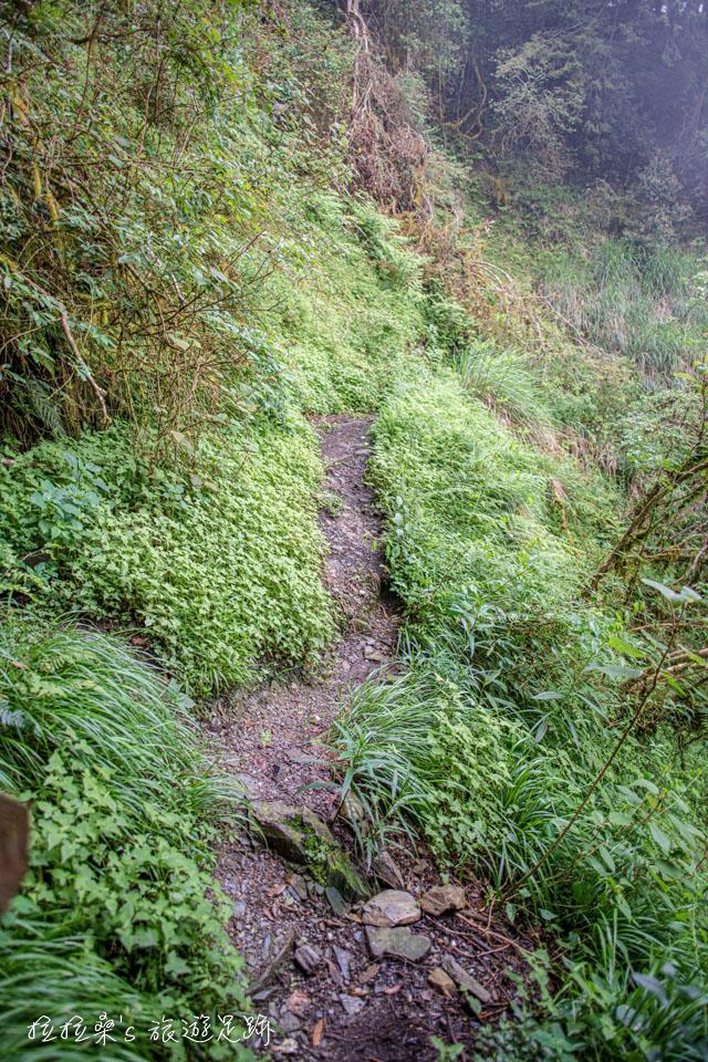 太平山見晴懷古步道900公尺後的路段均已崩塌