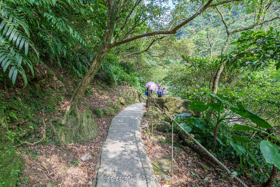 姜子寮絕壁步道前半段都有樹蔭遮陽