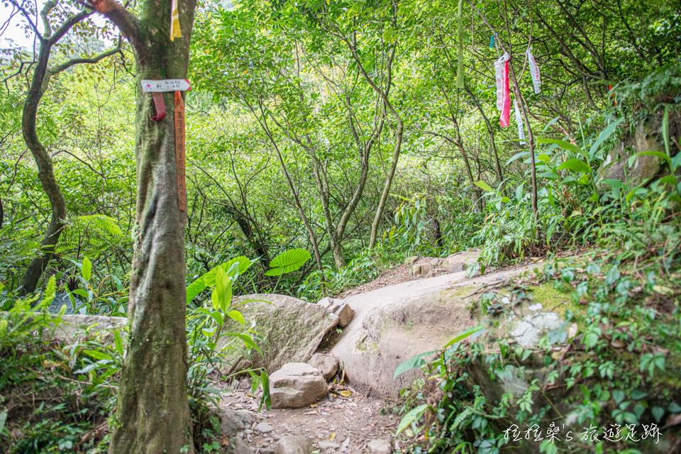 姜子寮絕壁步道後方的原始自然山徑,可通往姜子寮山