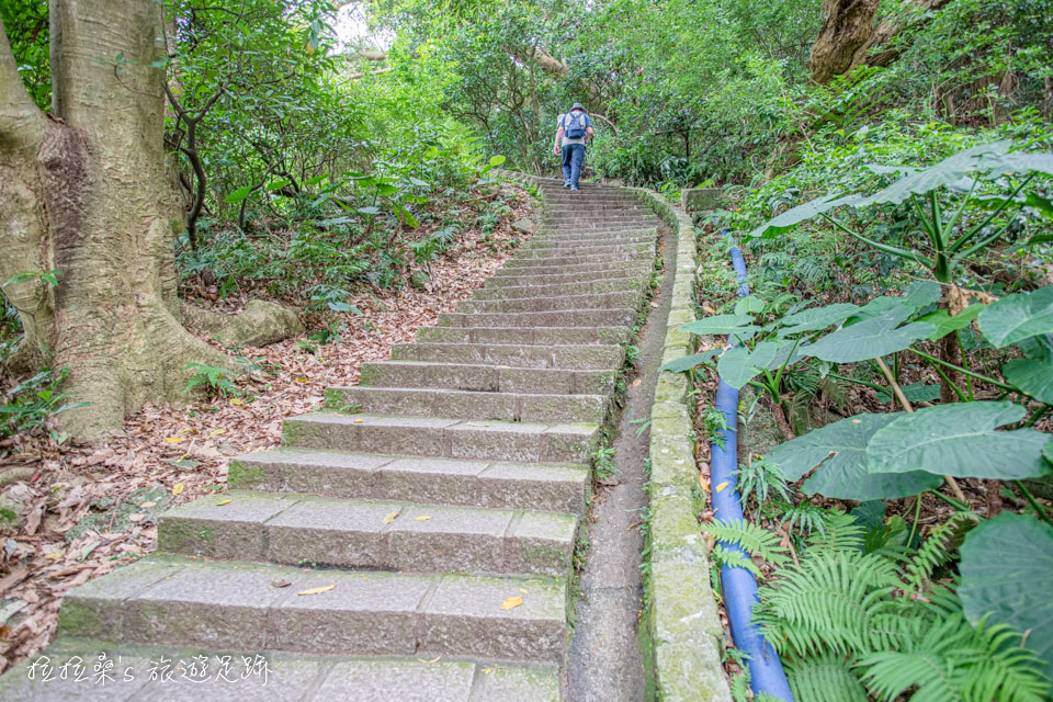 台北天母古道路水管路步道一路漫遊在樹蔭之下
