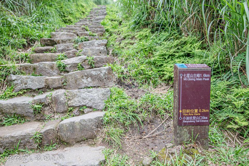 登台北的七星山,從小油坑登山口起登是最輕鬆的路線