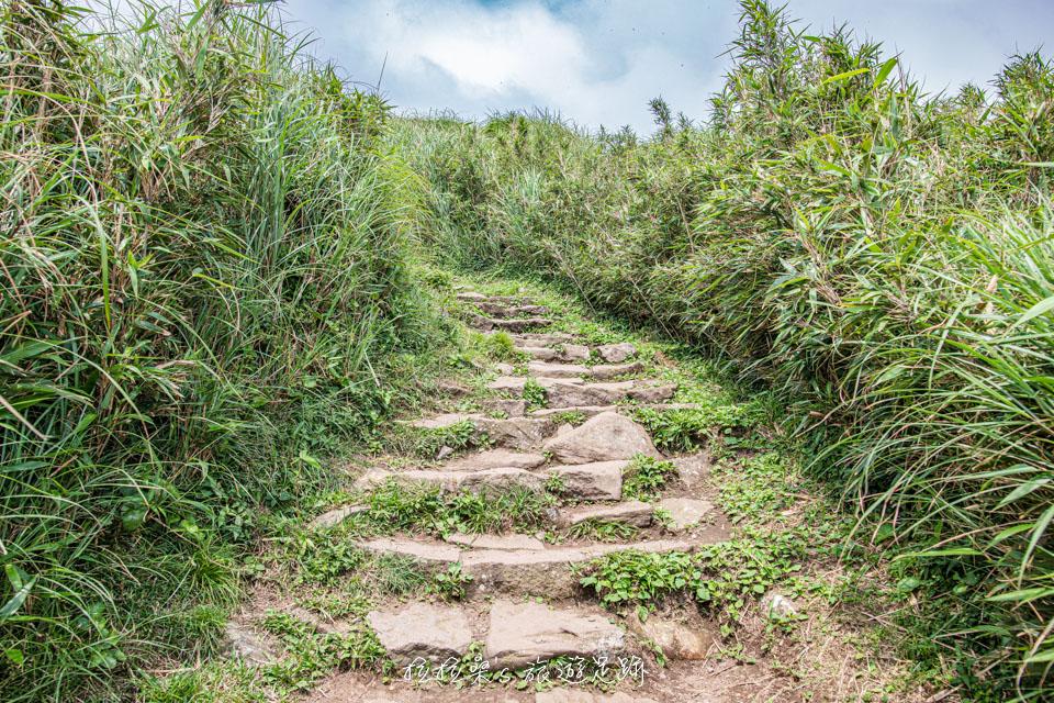 從小油坑登七星山途中會穿過幾處劍竹林