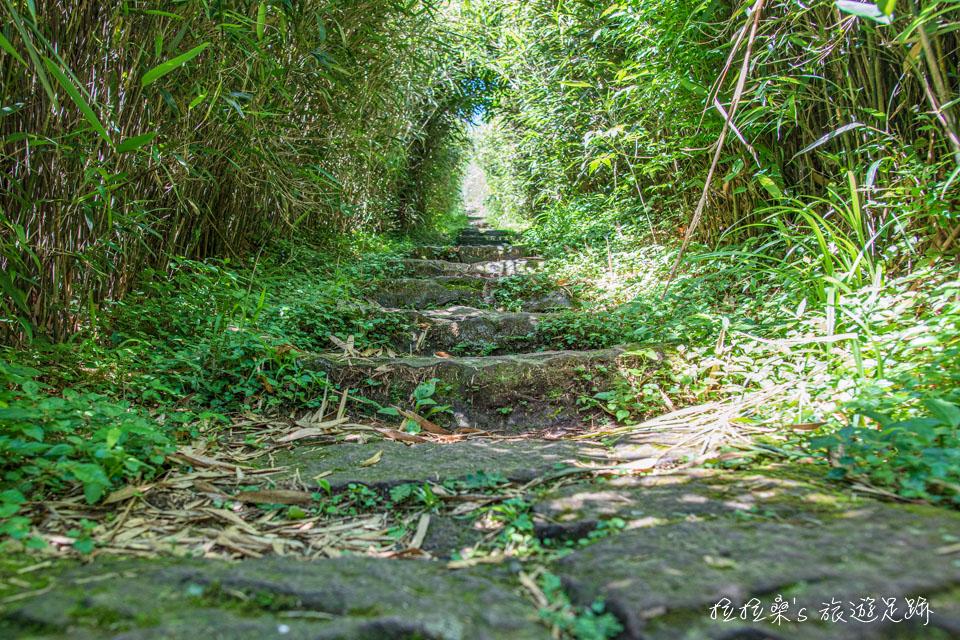 大屯山主峰登山步道長約1.6公里,兩邊是劍竹林以及茂密的芒草