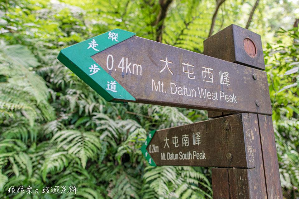 大屯山南峰通往西峰的岔路