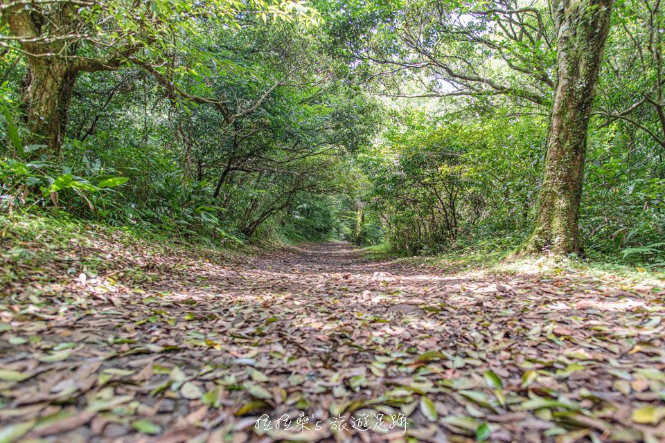 通往二子坪的步道景色絕佳,宛如綠色隧道般