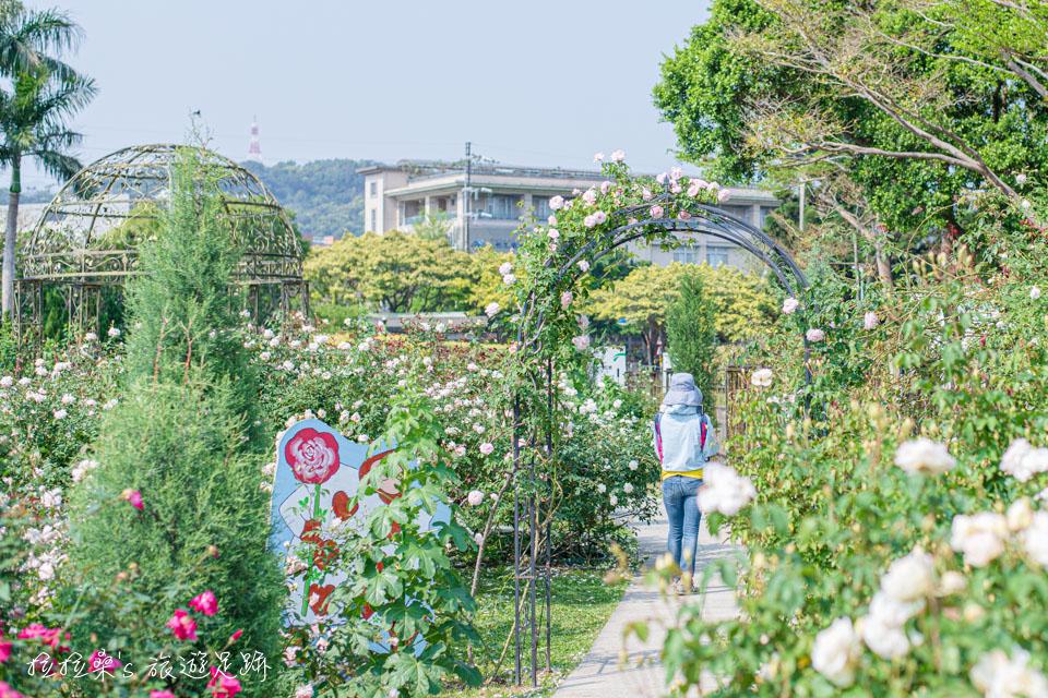 台北花博公園新生園區的玫瑰園也很有看頭
