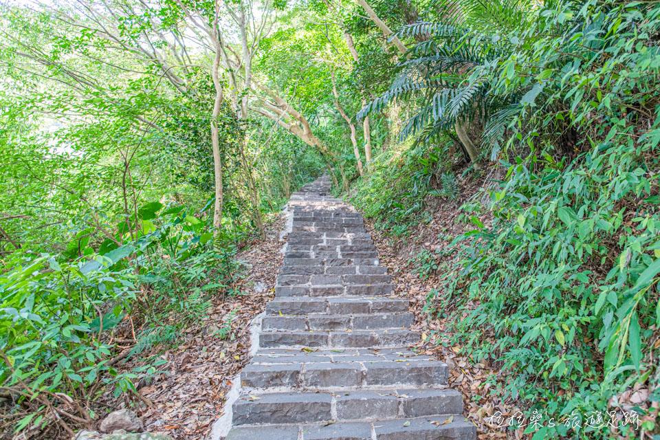 觀音山硬漢嶺步道前半段都是一路陡上的石階