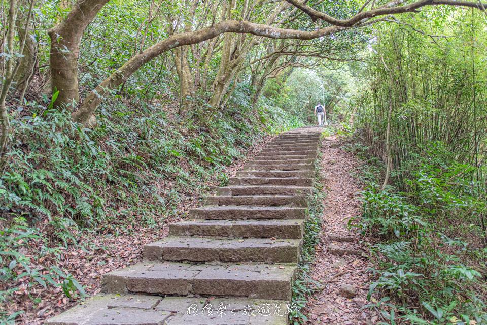 觀音山硬漢嶺步道沿途都有樹蔭遮陽