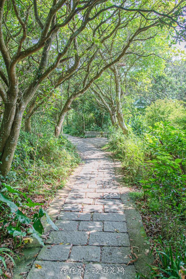 觀音山硬漢嶺步道後半多為平緩路段