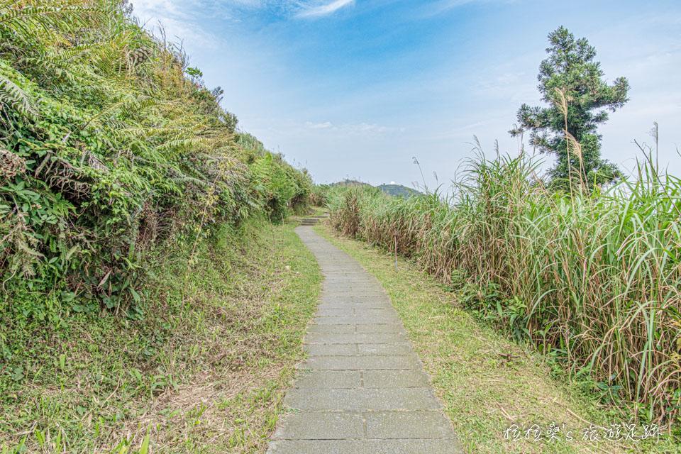 五分山步道後半段的稜線路段坡度平緩,走起來很輕鬆