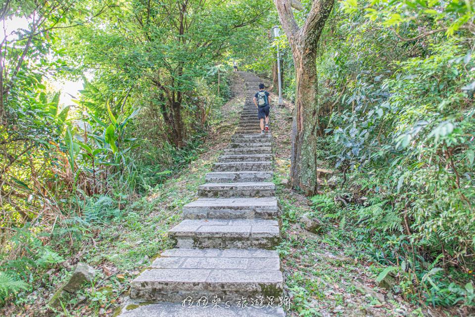 大尖山整條登山步道幾乎都在林蔭之下