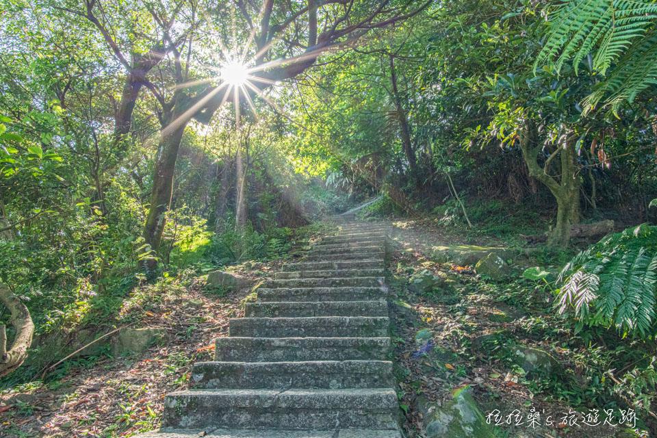 大尖山步道路況優質,階梯平整好走