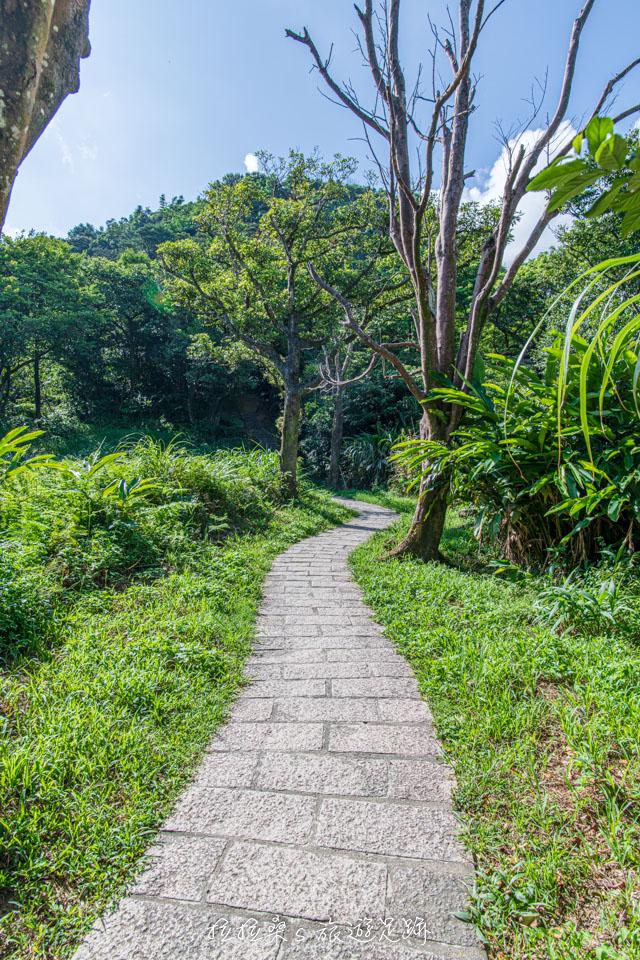 大尖山步道偶爾一小段平路就是大家喘口氣的地方